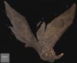 Bartosz-Stepinski-Motyl-100x120cm-akryl-na-plotnie-2015r.png